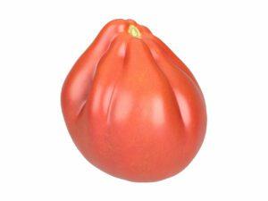 Oxheart Tomato #1