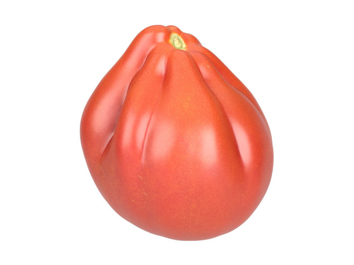 perspective view rendering of an oxheart tomato 3d model