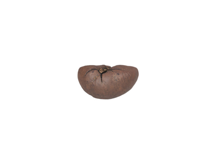 bottom view rendering of a coffee bean 3d model