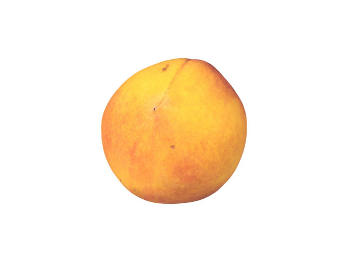 bottom view rendering of a peach 3d model