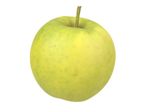 Apple #5