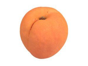 Apricot #2
