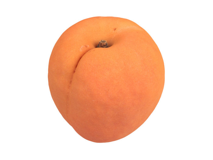 perspective view rendering of an apricot 3d model