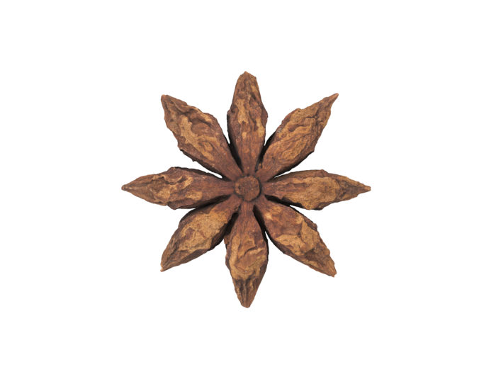 bottom view rendering of a star anise 3d model