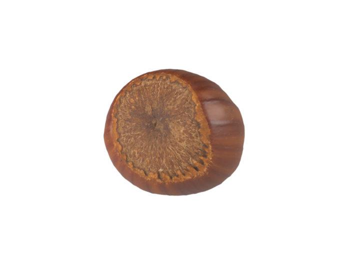 bottom view rendering of a hazelnut 3d model