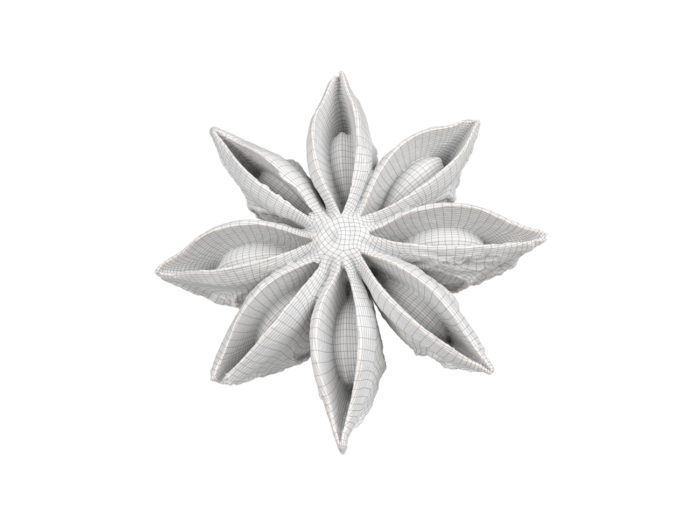 wireframe rendering of a star anise 3d model