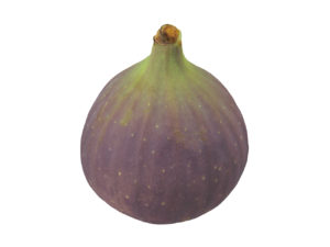 Fig #2