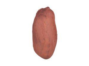 Peanut Kernel #1