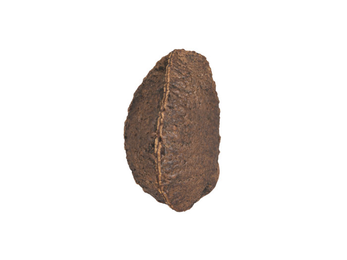 side view rendering of a brazil nut in shell 3d model
