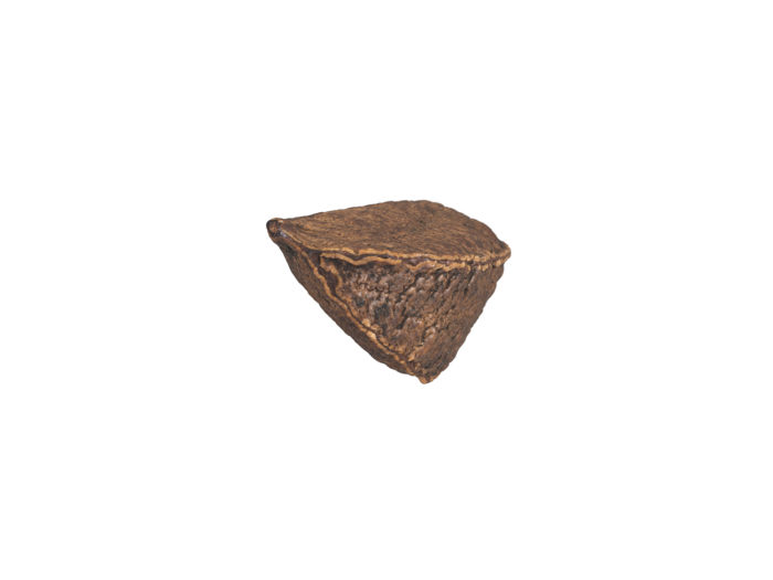 bottom view rendering of a brazil nut in shell 3d model