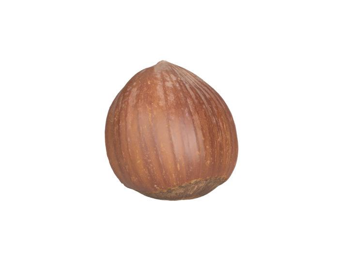 bottom view rendering of a hazelnut shell 3d model